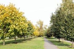 狭窄的路在有年轻秋天树的公园 图库摄影