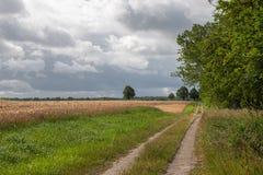 狭窄的道路带领通过粮田 免版税库存图片