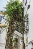 狭窄街道和特点马尔韦利亚,有花卉的白色墙壁 免版税图库摄影
