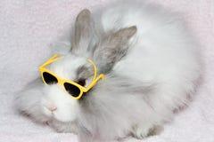 狮子兔子皇家s 库存图片