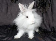 狮子兔子皇家s 免版税库存图片