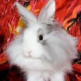 狮子兔子皇家s 库存照片