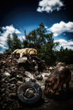 狮子和河马在大厦废墟 图库摄影