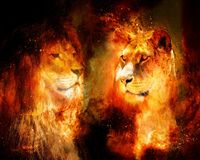 狮子和雌狮在宇宙空间 照片和图表作用 库存图片