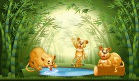 狮子在竹森林里 向量例证