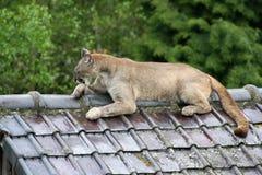 狮子山 库存图片