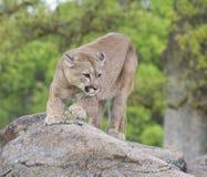 狮子山 免版税图库摄影