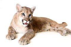 狮子山 库存照片