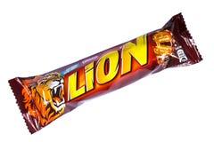 狮子巧克力块 免版税库存图片