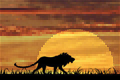 狮子日落 图库摄影