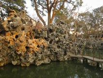 狮子森林的石头 库存图片