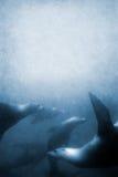 狮子海运纹理 免版税库存照片