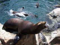 狮子海运 库存照片