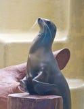 狮子海运 免版税库存图片