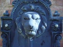 狮子的题头 图库摄影