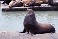 狮子码头海运 免版税库存照片