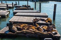 39头狮子码头海运 库存图片