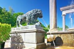 狮子级联在Pertergof,圣彼德堡。 免版税库存照片