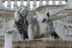 狮子翼 免版税库存照片