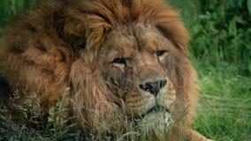 狮子轮和看看照相机 股票视频
