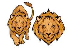 狮子集合 免版税库存照片