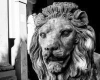 狮子雕象在意大利 库存照片