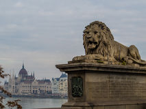 狮子雕象,铁锁式桥梁,布达佩斯 库存图片
