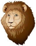 狮子面孔 库存图片