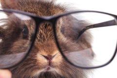 狮子顶头兔子兔宝宝佩带的玻璃 库存图片