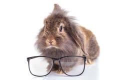 狮子顶头兔子兔宝宝开会 库存照片