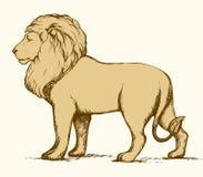 狮子 得出花卉草向量的背景 免版税库存照片