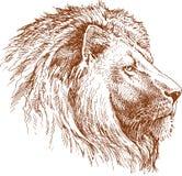 狮子 免版税库存图片