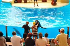 狮子loro parque海运显示 库存照片