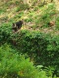 狮子taled猴子 免版税图库摄影