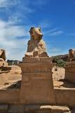 狮身人面象古埃及雕象在卢克索karnak寺庙的 免版税图库摄影