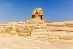 狮身人面象吉萨棉埃及 库存图片