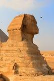 狮身人面象在吉萨棉,埃及 免版税库存图片