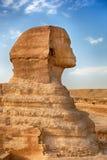 狮身人面象外形 免版税库存照片