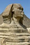 狮身人面象的头在吉萨棉高原的在开罗,埃及 图库摄影