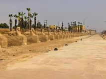 狮身人面象路埃及 免版税库存照片