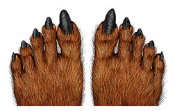 狼人脚 库存照片