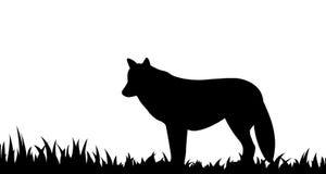 狼剪影在草的 免版税库存图片