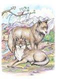狼和母狼 免版税库存照片