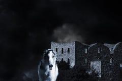 狼喜欢俄国猎狼犬视域猎犬 免版税库存照片