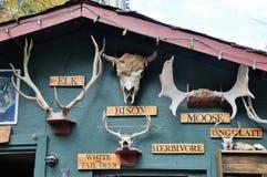狼圣所金黄,加拿大 免版税图库摄影