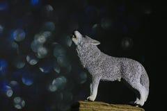 狼形象 库存照片