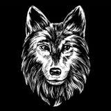 狼的枪口,在黑背景的野生生物手拉的传染媒介例证现实剪影白色 免版税库存照片