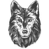 狼的枪口,野生生物手拉的传染媒介例证现实剪影 免版税库存图片