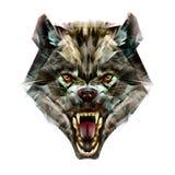 狼的色的枪口的被绘的画象 皇族释放例证