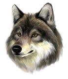 狼面孔 库存照片